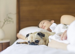 Woman sleeping with dog: sleep like a baby in 5 steps